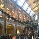 Natural History Musium恐竜をみにきたよ