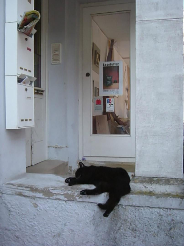 だらけた黒猫