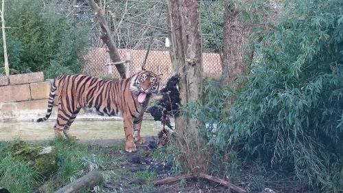 タイガーえさ