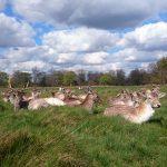 リッチモンドパークで気持ちいいお散歩&鹿を見るー